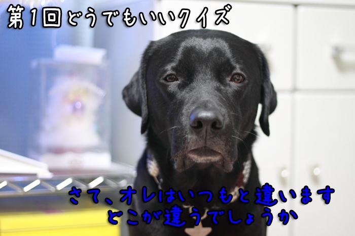 20111214-001.jpg