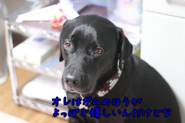 20111214-006.jpg