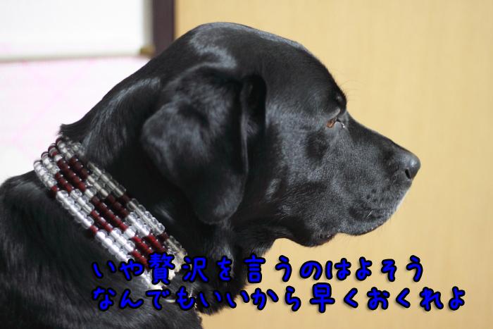 20111224-006.jpg
