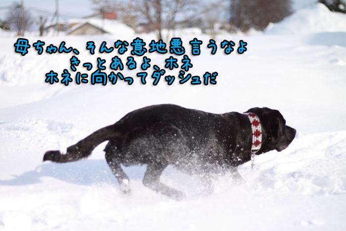 20120102-012.jpg