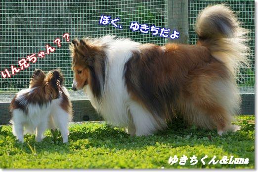 ゆきち&Luna