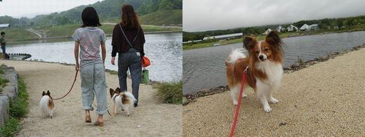 湖畔を散歩-4