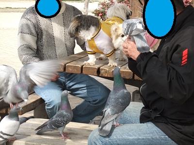 サブ×あや×鳩