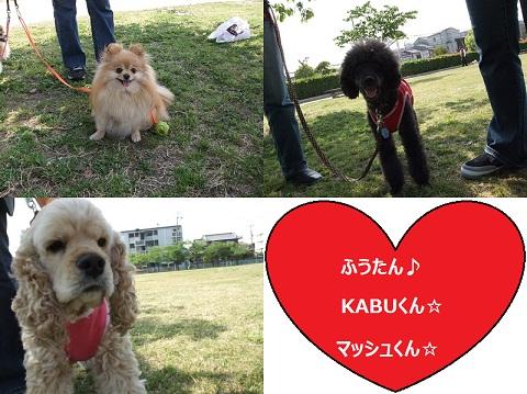 風花×KABU×マッシュ
