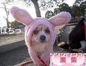 にほんブログ村 犬ブログ 黒柴