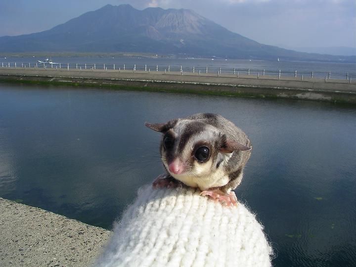rinyojirou.jpg