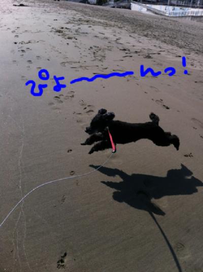 飛行犬!!