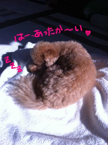 うちの…ネコ?