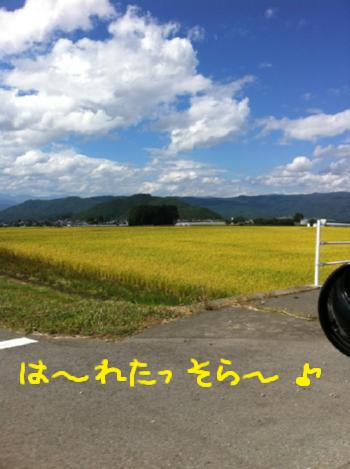 金色の野原