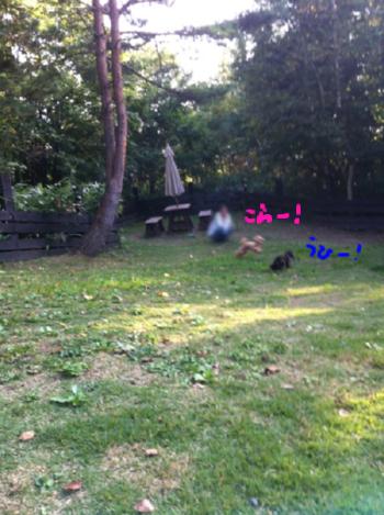 2広々専用のお庭