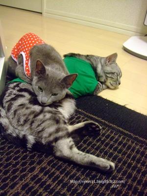 cat2_20100315141021.jpg