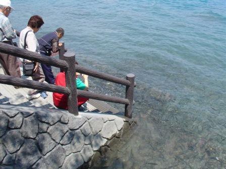 コピー ? 田沢湖2