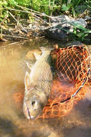 2011611岩魚
