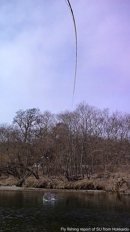 20110326b.jpg