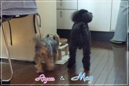 メイ&リヨン①