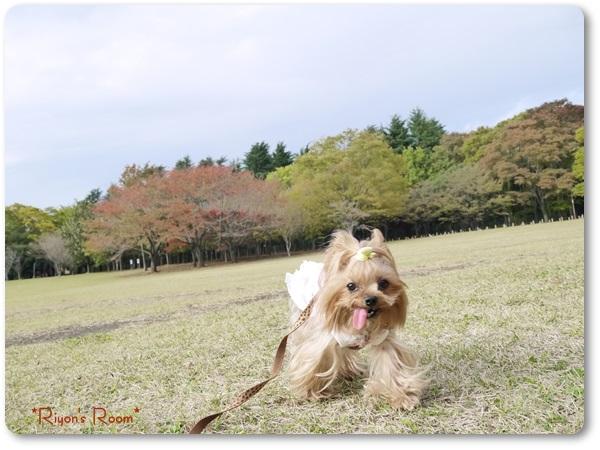 小金井公園②