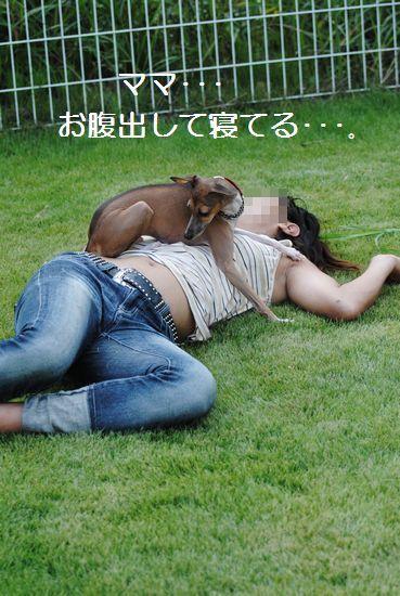 DSC_0009_20110802163320.jpg