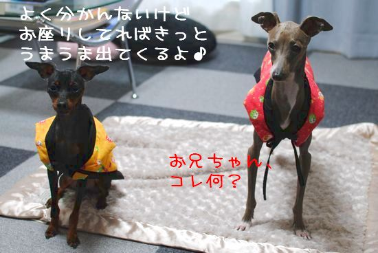 DSC_0012_20120123164315.jpg