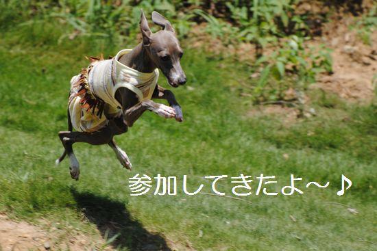 DSC_0060_20110720145243.jpg
