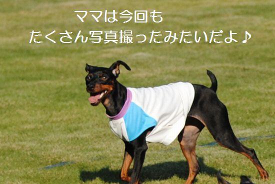 DSC_0061_20110728145613.jpg