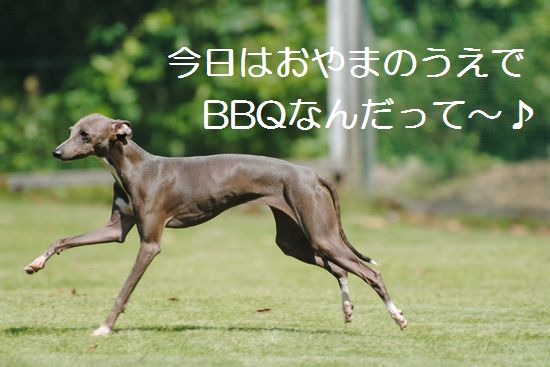 DSC_0066_20110926232251.jpg