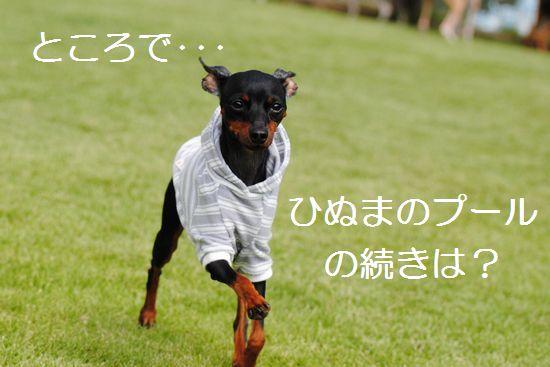 DSC_0134_20110926233419.jpg