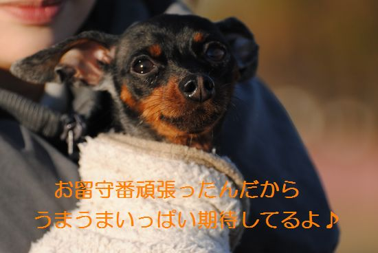 DSC_0449_20120114172026.jpg