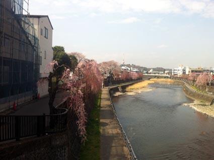宇都宮20130328 桜