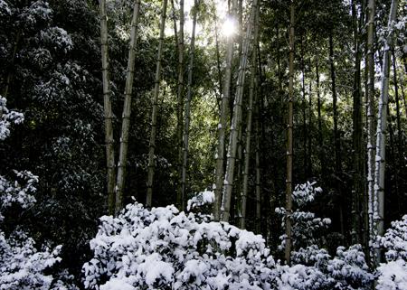 高山寺雪6