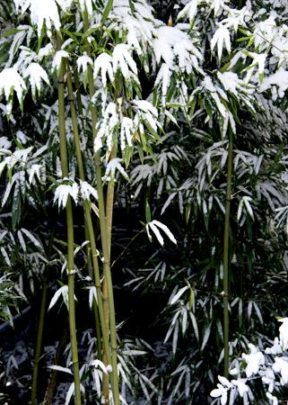 高山寺雪7