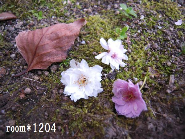 blog1012.jpg