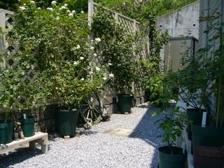 夏のバラたち20100723