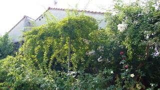 コマツガーデン20100728_2