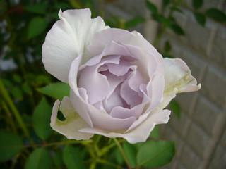 ルシファー20100919