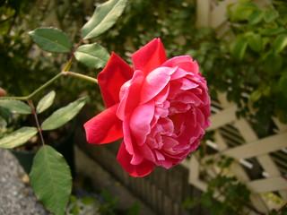 ルイフィリップ20101016