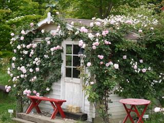 つるバラの小屋20110610