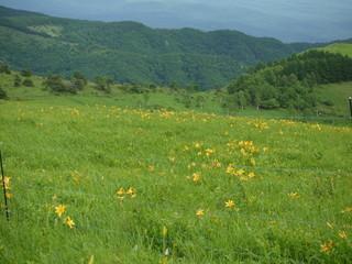 車山高原20110708_5