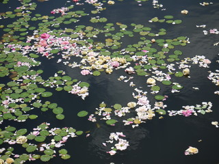 軽井沢レイクガーデン20110711_32