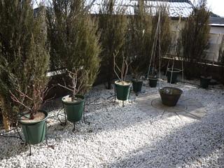 冬剪定20120129