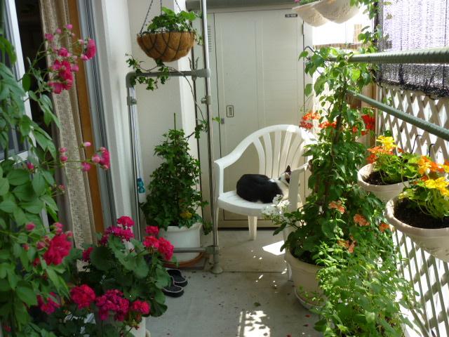 華やかな庭