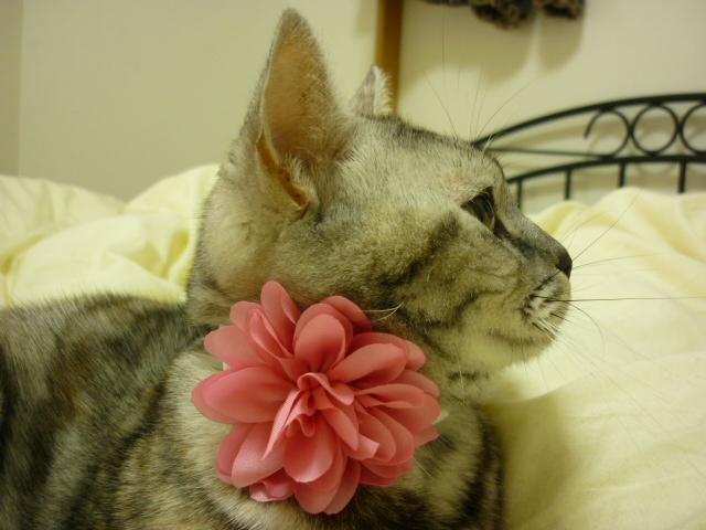 お花の首輪004