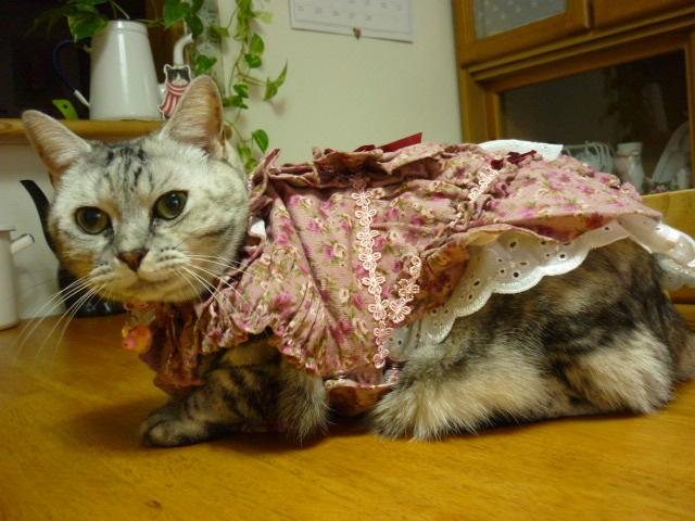 ステキなドレス2