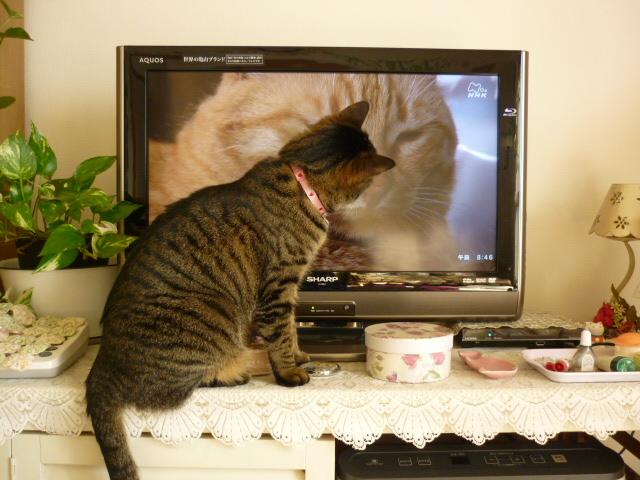 テレビを見るもね2