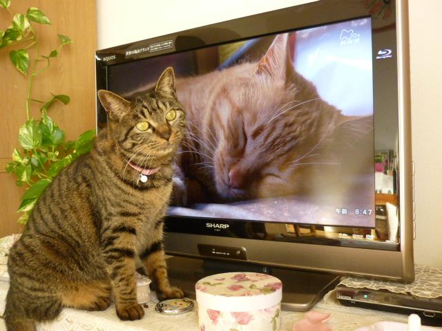 テレビを見るもね3