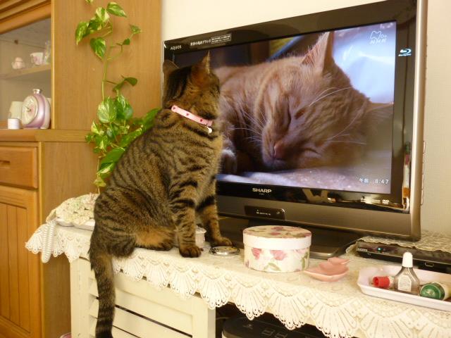 テレビを見るモネ4