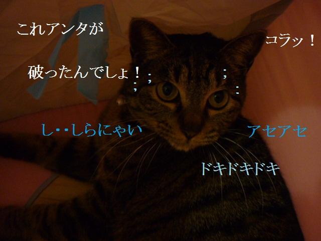 アタシじゃにぃにゃ!