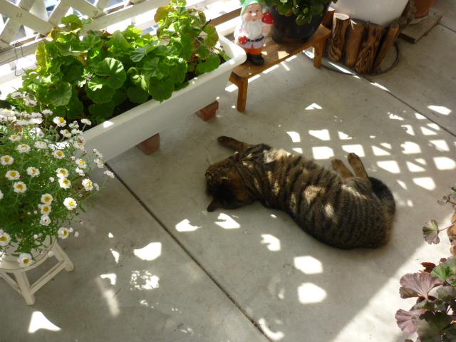 お庭のモネちゃん2
