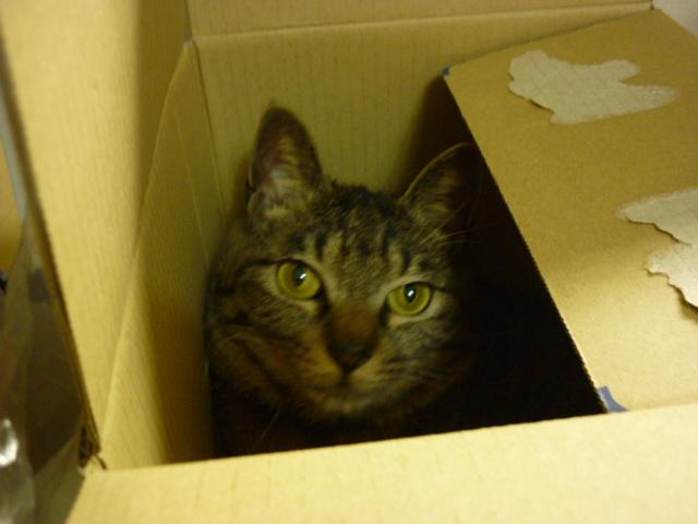 モネびっくり箱2