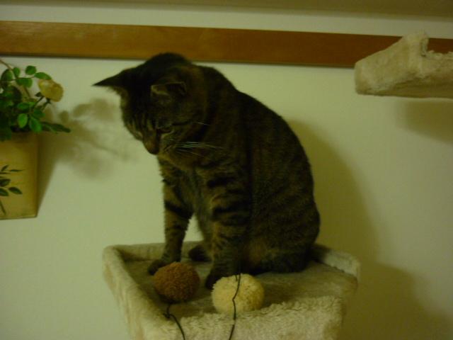 考える猫1