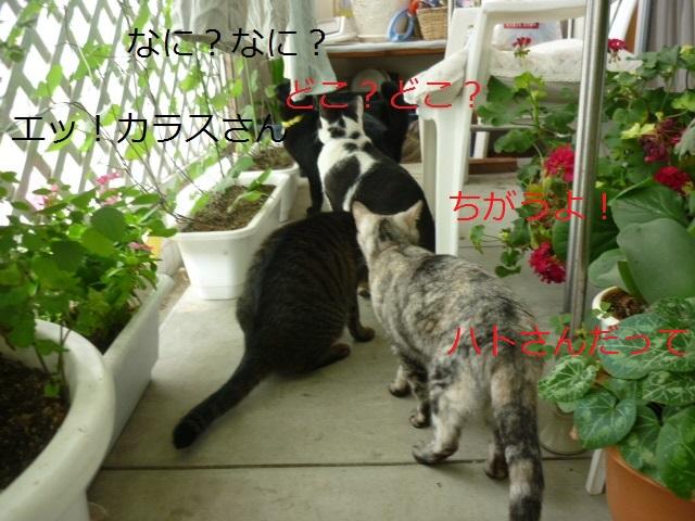 わらわら集まる猫